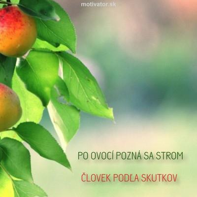 Po ovocí pozná sa strom, človek podľa skutkov.